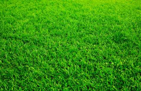 How to Maintain a Healthy Lawn Without the Use of Pesticides